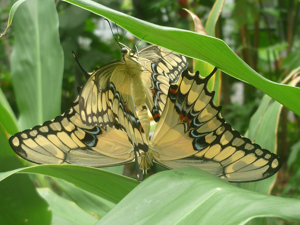 Butterfly in El Valle