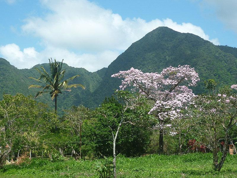 Northern Mountain Ridge