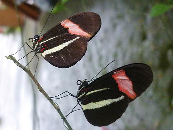 Butterflies of El Valle