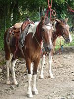 El valle de anton panama - El valle de los caballos ...
